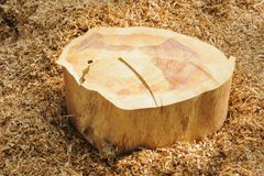 Big wooden stump. Stock Images