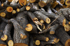 Big woodpile from asian tree Royalty Free Stock Image