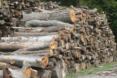Big woodpile on grass Royalty Free Stock Photo