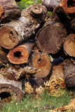 Big woodpile on grass Stock Photo