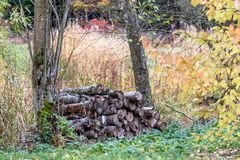 Big wood pile between two trees. Big woodpile on a meadow between two old trees stock images