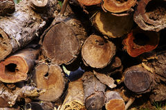 Big woodpile from red wood Royalty Free Stock Photo
