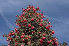 Big xmas tree on blue sky background Royalty Free Stock Photography