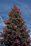 Big xmas tree on blue sky background Stock Photography