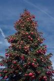 Big xmas tree on blue sky background Stock Photography