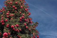 Big xmas tree on blue sky background Stock Photo