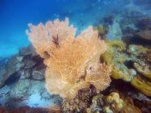 Big yellow coral and small fish swimming Stock Photos