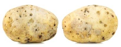 Big yellow potato macro Stock Photos