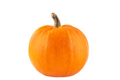 Big yellow pumpkin on a white background Stock Image