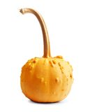 Big yellow pumpkin on a white isolated Royalty Free Stock Image
