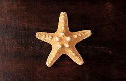 Big yellow seastar. Royalty Free Stock Photo