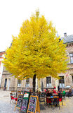 Big yellow tree in Prague Castle area. The tree locates near a coffee shop inside castle wall. Stock Images