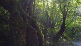 Bigar siklawa w Rumunia - jeden piękne siklawy w kraju zdjęcie wideo