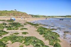 Bigbury Beach Devon UK
