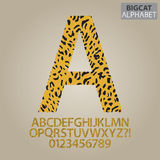 Bigcat Skin Alphabet and Numbers Vector Royalty Free Stock Image