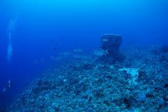 Bigeye trevally fish Stock Images
