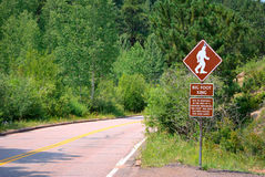 Bigfoot Crossing Royalty Free Stock Photo