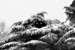 Bigfoot dziura Fotografia Royalty Free