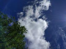 Bigger than me. Cloud near trees Stock Image