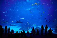 Biggest aquarium in the world. Atlanta, Georgia. Royalty Free Stock Photo