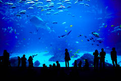 Biggest aquarium in the world. Atlanta, Georgia. Royalty Free Stock Photography