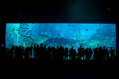 Biggest aquarium in the world stock photography