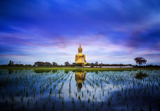 A biggest Buddha in Thailand stock images