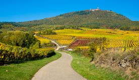 The Koenigsbourg castle in Alsace. The biggest castle in Alsace in France, the Haut Koenigsbourg surrounded by autumn colors stock photos