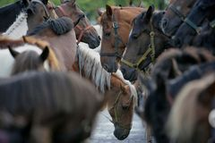 Biggest horse trade fair of Western Europe Royalty Free Stock Photos