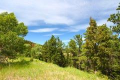 Bighorn国家森林怀俄明 免版税库存图片