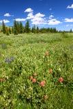 Bighorn国家森林野花 库存图片