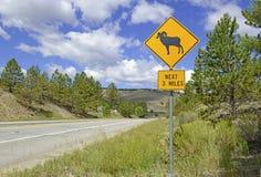 Σημάδι για τα δύσκολα βουνά προβάτων Bighorn, Κολοράντο Στοκ Εικόνες