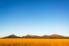 Bighorn-Berge früh morgens Lizenzfreie Stockfotos