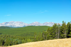 Bighorn Mountains and Forest Royalty Free Stock Photo
