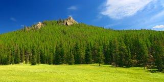 Bighorn Nationaal Forest Landscape Wyoming Royalty-vrije Stock Afbeeldingen