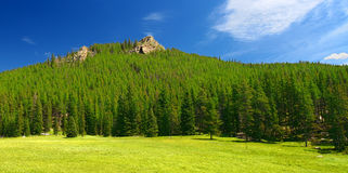 Bighorn National Forest Landscape Wyoming Royalty Free Stock Images