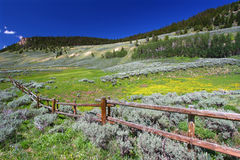 Bighorn National Forest Scenery. Beautiful wildflowers along a rustic fenceline in the Bighorn National Forest of Wyoming Stock Photos