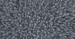 Bighorn opadu śniegu flyover zbiory wideo