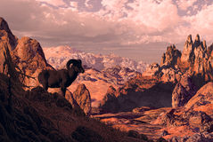 Bighorn Sheep. Overlooking rocky landscape royalty free illustration