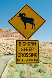 Bighorn Sheep Crossing Stock Images