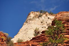 Bighorn sheeps in Zion National Park stock image