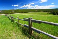 Bighornmedborgare Forest Fenceline royaltyfri fotografi