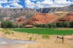Bighornnationalskog i Wyoming USA arkivbild