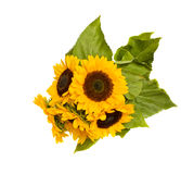 Bight sunflowers bouquet Royalty Free Stock Image