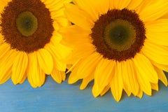 Bight sunflowers Stock Images