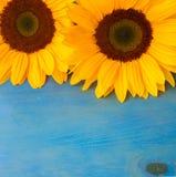 Bight sunflowers Stock Photo