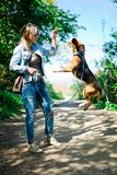 Bigle όπως το σκυλί στο λουρί που πηδά για να πάρει την ανταμοιβή - γλυκό titbit - υψηλό άλμα στοκ φωτογραφία με δικαίωμα ελεύθερης χρήσης