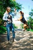 Bigle jak pies na smycza doskakiwaniu dostawać nagrodę wysoki skok - słodki titbit - zdjęcie royalty free