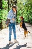 Bigle zoals hond op leiband die beloning springen te krijgen - oefen huisdier op bosweg uit stock foto's