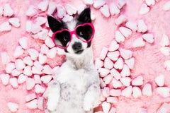 Biglietti di S. Valentino rosa di amore del cane immagini stock libere da diritti